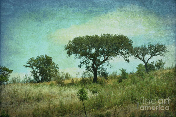 Wall Art - Photograph - Summer On The Hill - Portugal by Mary Machare
