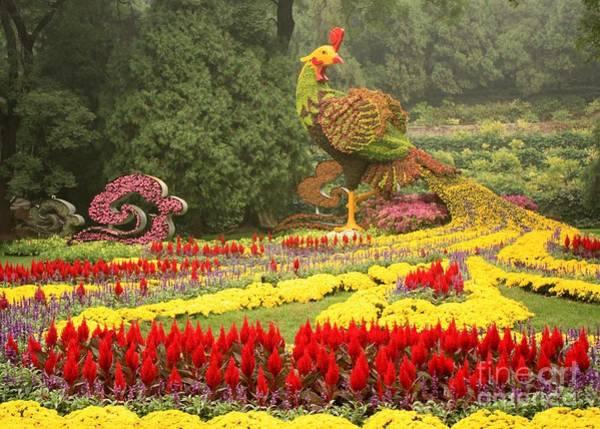 Photograph - Summer Palace Flower Phoenix by Carol Groenen
