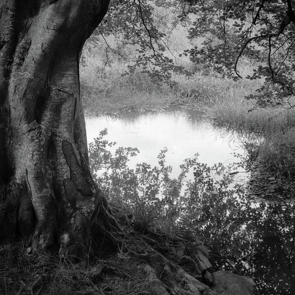 Wall Art - Photograph - Summer Pond by Dave Bowman
