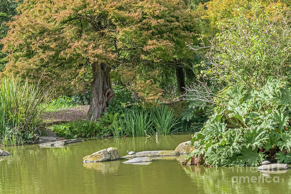 Photograph - Summer Pond by Kate Brown
