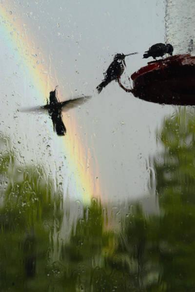 Photograph - Summer Rain by Becky Titus