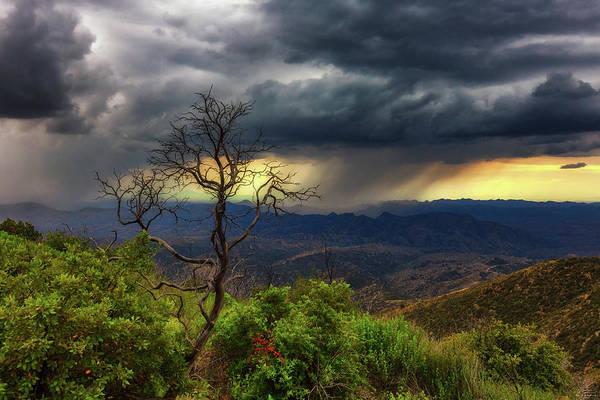 Photograph - Summer Rains by Rick Furmanek