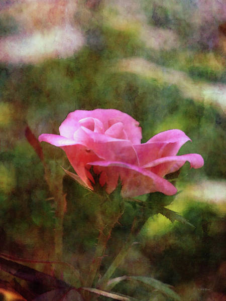 Photograph - Summer Rose 3748 Idp_2 by Steven Ward