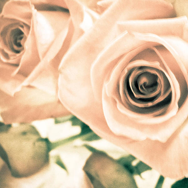 Wall Art - Photograph - Summer Roses by Colleen Kammerer