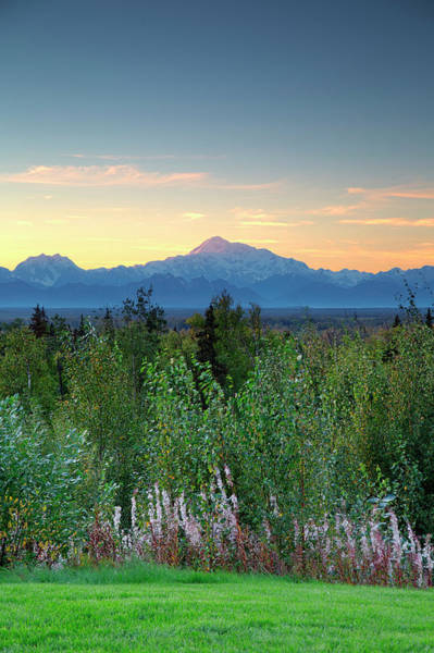 Fireweed Photograph - Summer Set Denali by Ed Boudreau