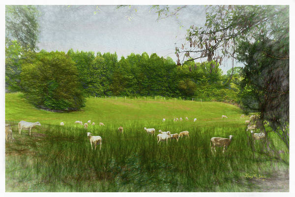 Digital Art - Summer Sheep by Barry Jones