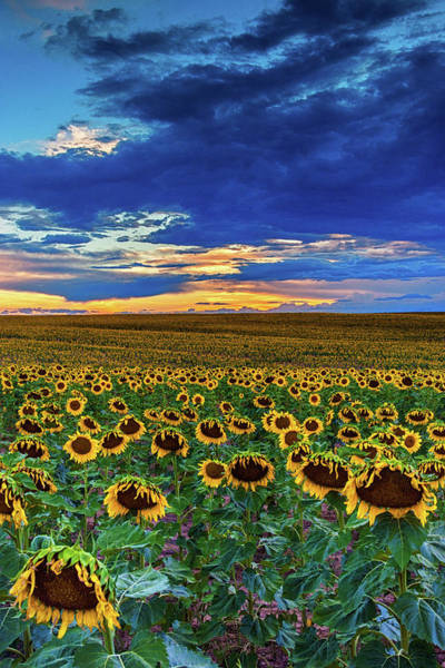 Photograph - Summer Skies In Colorado by John De Bord