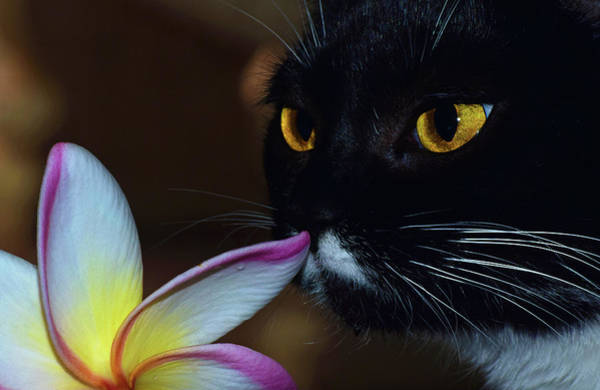 Photograph - Summer Sniffing Plumaria by Larah McElroy