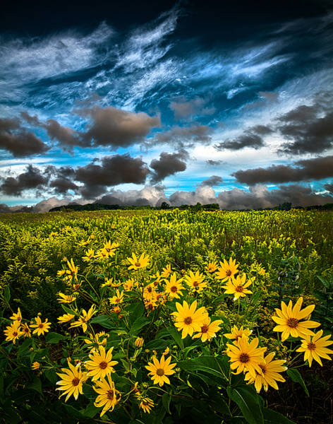 Natur Wall Art - Photograph - Summer Solitude by Phil Koch