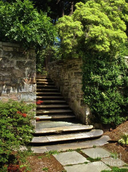 Photograph - Summer Steps by Mark Miller