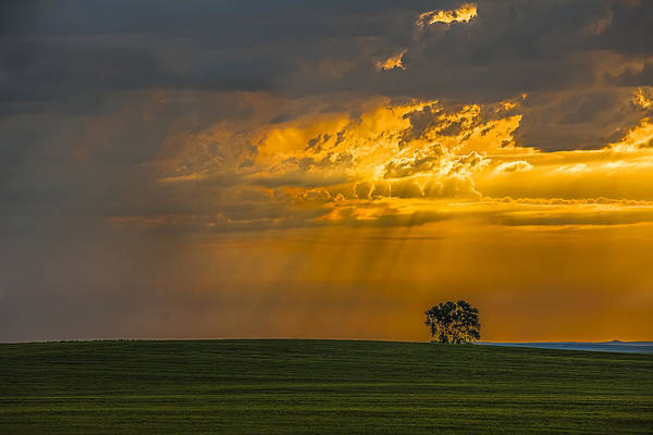 North Dakota Photograph - Summer Storm Of Nd by Donni Mac
