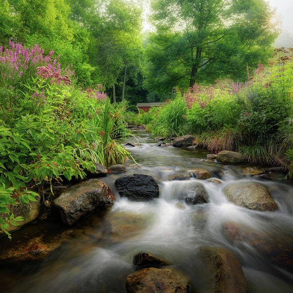 Photograph - Summer Stream Square by Bill Wakeley