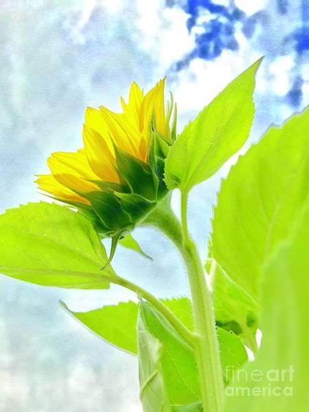 Photograph - Summer Sunflower  by Susan Carella