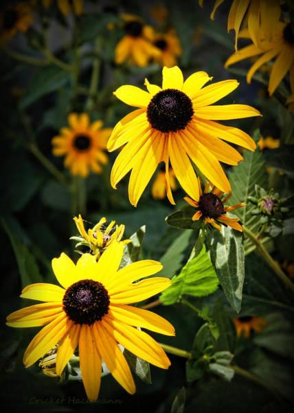 Photograph - Summer Sunshine by Cricket Hackmann