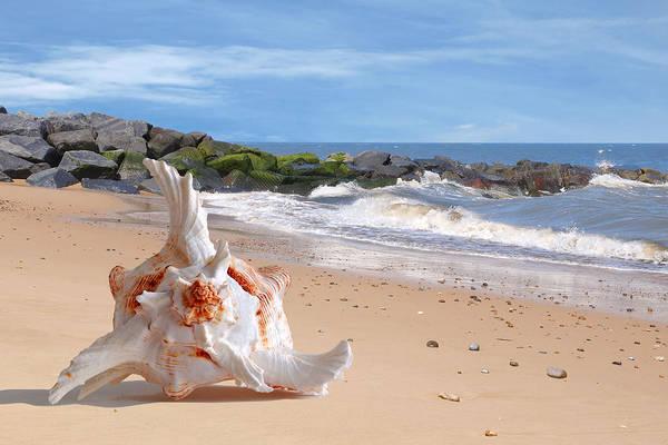 Photograph - Summer Tide - Murex Seashell by Gill Billington