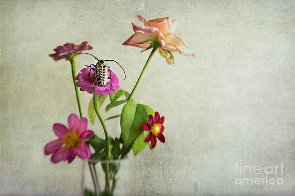 Wall Art - Photograph - Summer Time by Elena Nosyreva