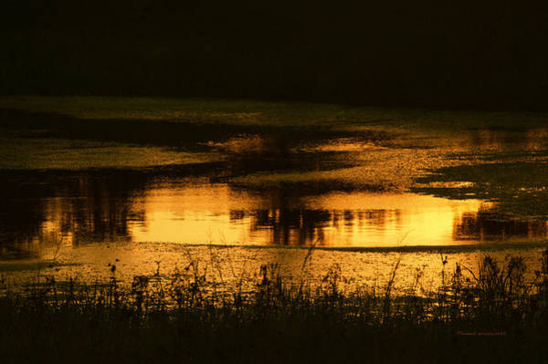 Wall Art - Photograph - Summer Time The Golden Moment On The Pond by Thomas Woolworth