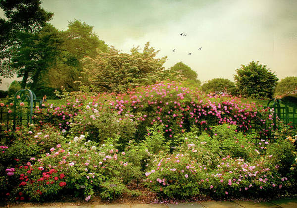 Photograph - Summer Trellis  by Jessica Jenney