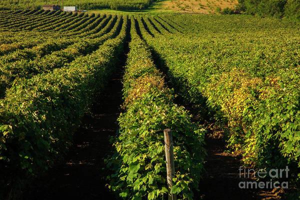 Wall Art - Photograph - Summer Vines by Mike Dawson