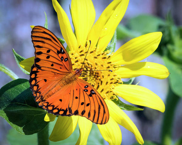 Photograph - Summer Visitor by Van Sutherland