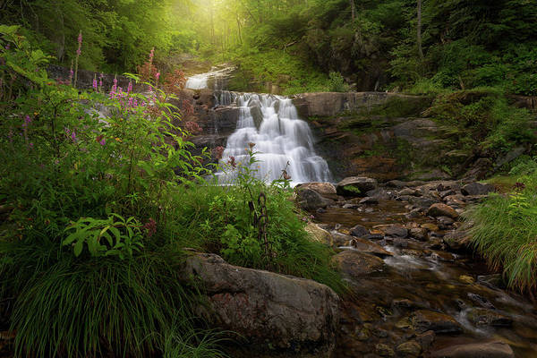Photograph - Summer Waterfall by Bill Wakeley