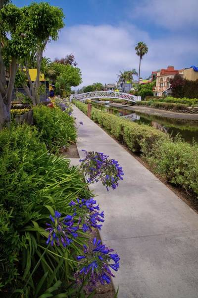 Photograph - Summertime Along The Venice Canals by Lynn Bauer