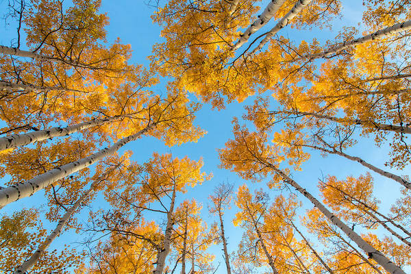 Photograph - Summit Yellow  by Kevin  Dietrich