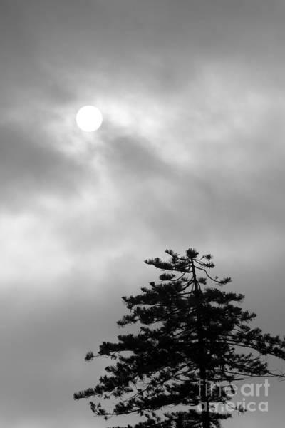 Marine Layer Photograph - Sun And Tree by Balanced Art