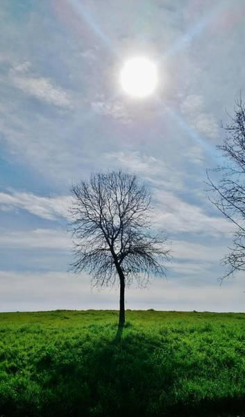 Plein Air Photograph - Sun And Tree Of Stillness by Peggy Leyva Conley