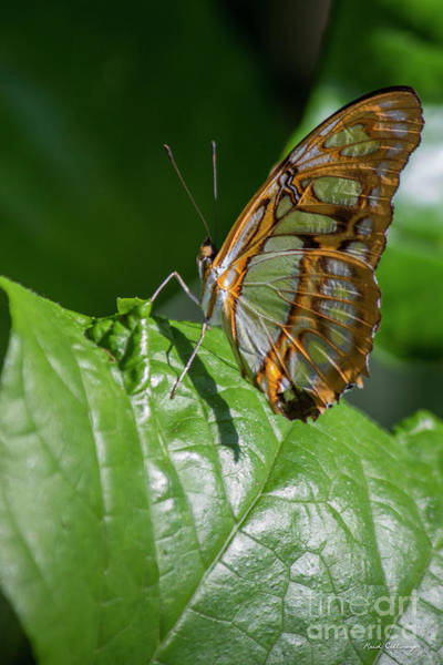 Photograph - Sun Bathed Cecil B Day Butterfly Center Callaway Gardens Art by Reid Callaway