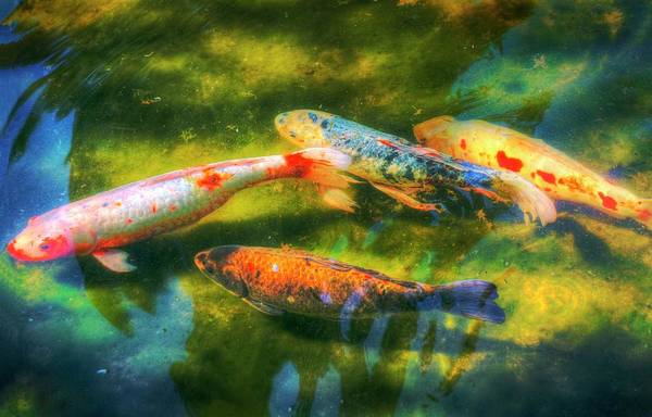 Photograph - Sun Bathing In Spring Water by Quality HDR Photography