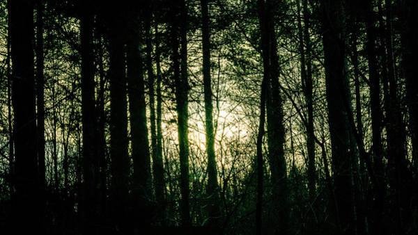 Photograph - Sun Behind The Trees A by Jacek Wojnarowski