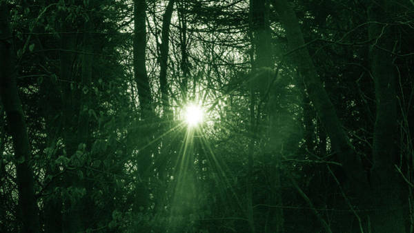 Photograph - Sun Behind The Trees B by Jacek Wojnarowski