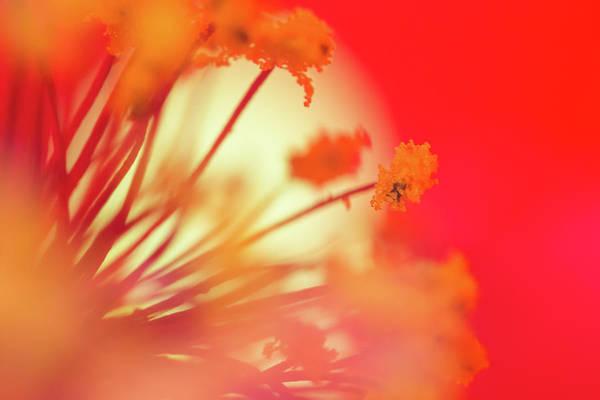 Photograph - Sun Blossom by Brian Hale