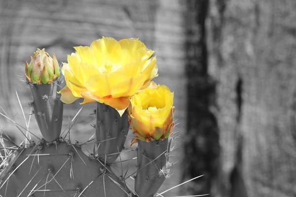 Photograph - Sun Burst by Colleen Cornelius