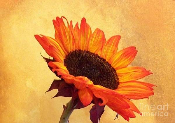 Sunflower Seeds Photograph - Sun Catcher by Marsha Heiken