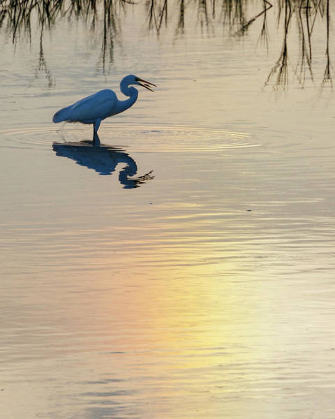 Photograph - Sun Dog And Great Egret 4 by Rob Graham