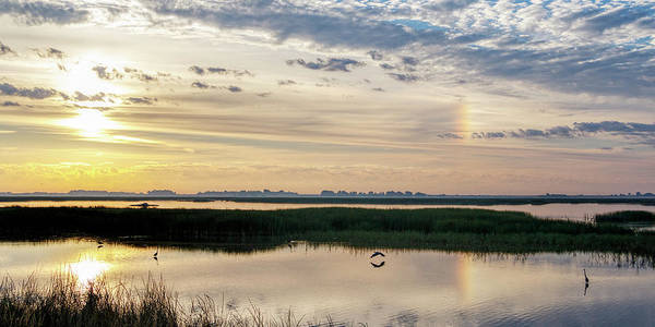 Photograph - Sun Dog And Herons by Rob Graham