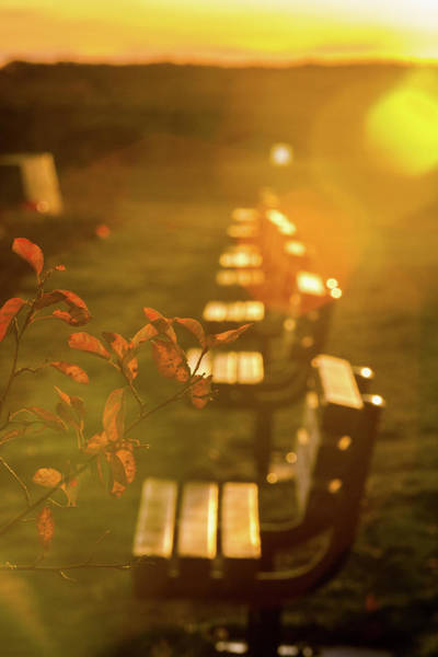 Photograph - Sun Drenched Bench by Darryl Hendricks