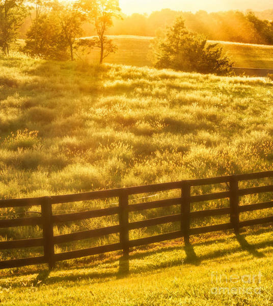 Photograph - Sun-drenched Pasture by Mark Miller