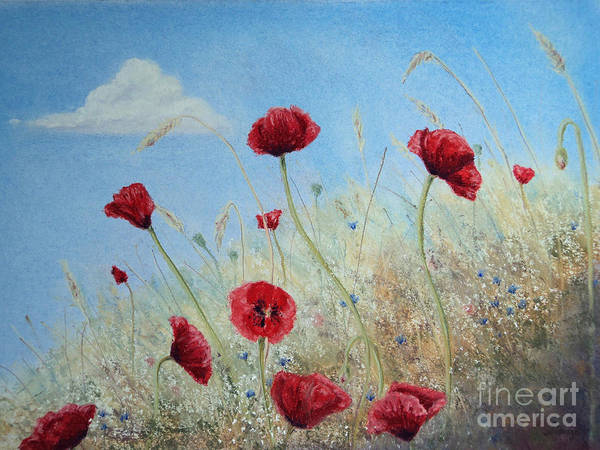Blue Cornflower Painting - Sun Drenched by Stanza Widen