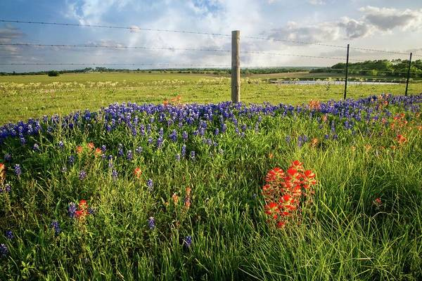 Photograph - Sun-drenched Wildflowers In Brenham by Lynn Bauer