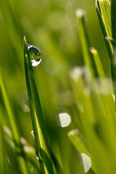 Photograph - Sun Drop by James Reed