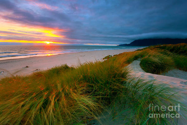 Photograph - Sun Dunes by Beve Brown-Clark Photography