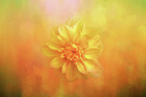 Wall Art - Digital Art - Sun Fire Dahlia by Terry Davis