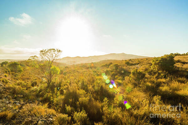 Grassland Photograph - Sun Flare Prairie  by Jorgo Photography - Wall Art Gallery