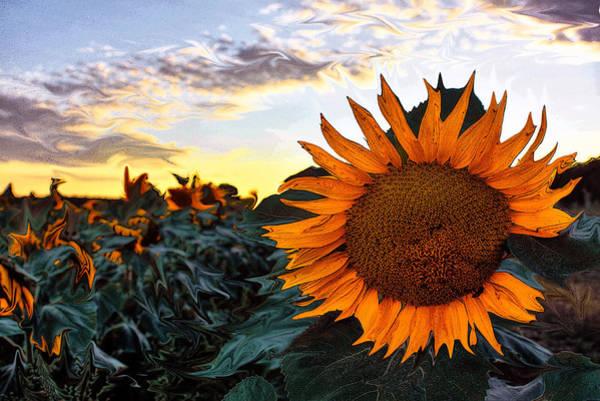 Photograph - Sun Flower Liquid. by David Matthews