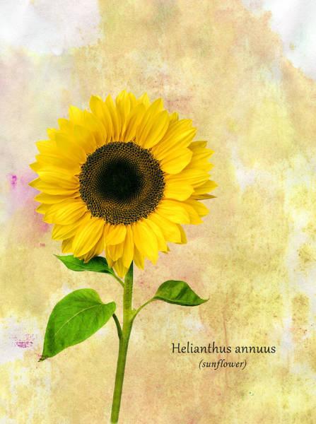 Wall Art - Photograph - Sun Flower by Mark Rogan