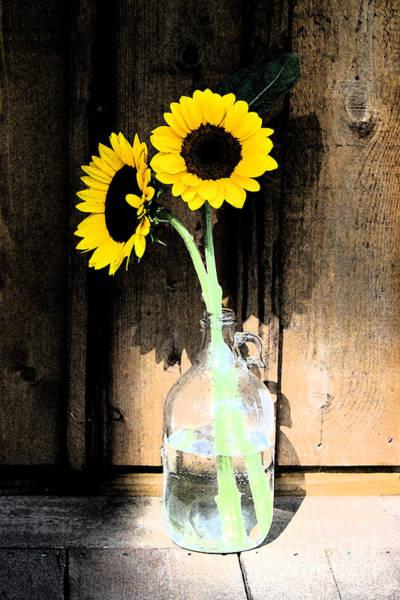 Sunflowers In A Vase Photograph - Sun Flower Shadow Creative Art by Cheryl Aguiar