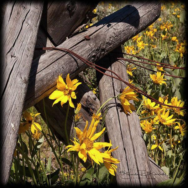 Wall Art - Photograph - Sun Flowers by Brenda D Busskohl